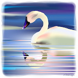 X SWAN'S REFLECTION - WAGNER