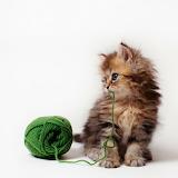 ~Daisy Kitten~