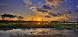 Everglades-935