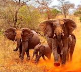 Tsavo East, Kenya