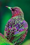 ColourfulBird