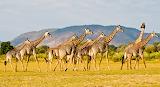 Zambia-Large tcm233-2396497