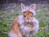 Grumpy Bunny hates Easter!