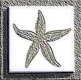 In25277b-Starfish-Ceramic-Tile