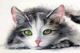 Kitty with the Beautiful Eyes, Maria Raczynska