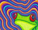 red eyed tree frog, Matt Molloy