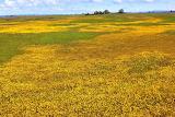 Spring Wildflowers ~ California