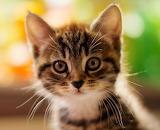 #Cute Kitty