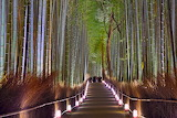 POTW The Bamboo Forest