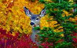 ☺♥ Deer...