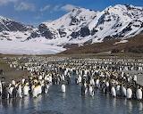 Zavadovsky Island,penguin