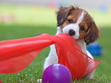 ☺ Playful puppy...
