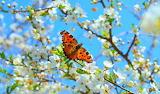 Весна. Бабочка