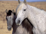 White mother and colt