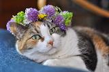 Midsummer cat