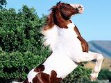 Horse-animals-look