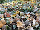 Frosty Fall Foliage
