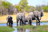 Elephant Family Brave Africa