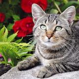 cat 032