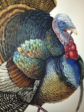 ^ Pen and Ink Watercolor Turkey