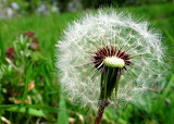 Nature @ freeimages...