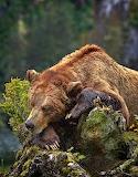 WM Bear 3