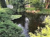 Fish Pond (26 of 28)