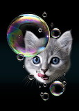 Bubble Cutie Kitty