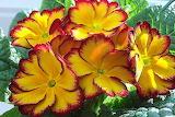 Flowers @ wallpaper cave.com...