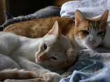 3-cats-in-a-bed-