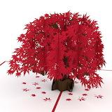 ^ Lovepop Japanese Maple