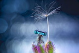 """Science tumblr natgeoyourshot Dragonfly """"Yong Miao"""" """"Jiaxing, Ch"""