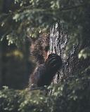 Madamma tumblr dogstardreaming bear