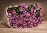 Cesto con flores 5