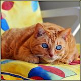Orange Kitty...