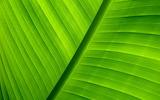 00240_green_1920x1200
