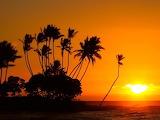 Trees Big Island of Hawaii sunset