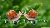 Snails-wallpaper-1920x1080