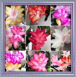 Floral multi choice