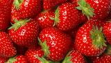 season for strawberries