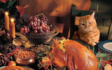 Thanksgiving cat animals table setting 1680x1050 hd-wallpaper-18