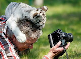 Tiger cub and photographer