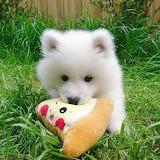 Floofy Cuteness