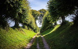 The-summer-natural-woods-road 1920x1200