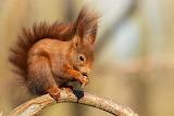 Squirrels 570413 1280x853