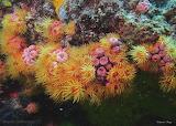 undersea province