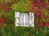 ^ Window foliage