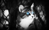 Animal-cat-eyes