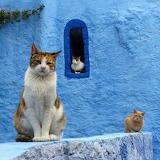 Marrakech Cats