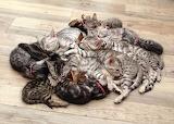Heap of Cats